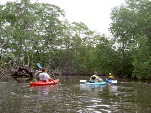 Mangrove Tour at Playa La Barqueta
